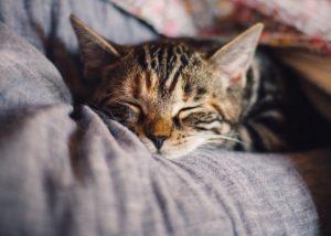 Verbessere Dein Schach im Schlaf