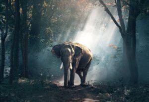 Eröffnungsfallen: Die Elefanten-Falle